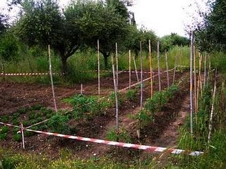 ΨΑΧΝΟΝΤΑΣ…ΤΗΝ ΑΛΗΘΙΝΗ ΖΩΗ - Ρωμαίικος Καλλιεργητής
