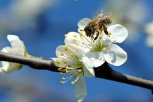 Σεμινάριο Μελισσοκομίας και Αγροτικής Οικονομίας