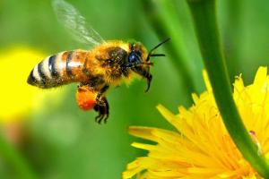 Μέλισσα και Ελλάδα: Μια ευλογημένη παρέα