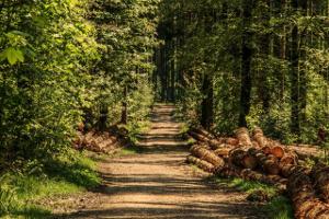 Ἀγαπᾶτε τά δάση