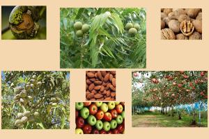 Ενημερωτική ημερίδα για την καλλιέργεια της καρυδιάς, της αμυγδαλιάς και της μηλιάς στις Σέρρες