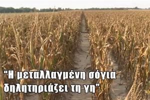 Σόγια: Ένα στρατηγικής σημασίας φυτό (Μέρος Γ)