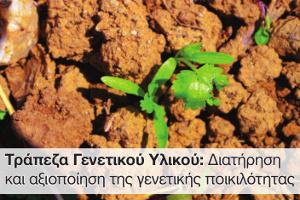 Τράπεζα Γενετικοῦ Ὑλικοῦ: Διατήρηση καί ἀξιοποίηση τῆς γενετικῆς ποικιλότητας