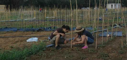 Βγήκε η πρώτη σοδειά στους λαχανόκηπους του ΑΠΘ