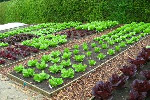 Αγροτική Ανάπτυξη