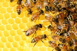 Τό μέλι ὡς τροφή καί φάρμακο
