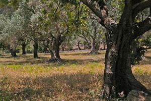 Σεμινάρια ελαιοκομίας από τον Ιερό Ναό Αγίου Δημητρίου Αγρινίου 8-4-2019