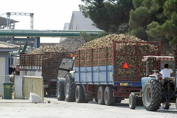 Οι καλλιεργητές τεύτλων μεταφέρουν την παραγωγή τους στα εργοστάσια της Ε.Β.Ζ.