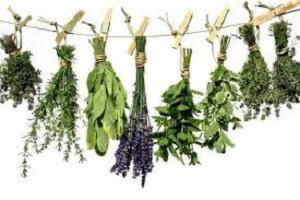 Ημερίδα στην Δράμα για Αρωματικά Φυτά (18-2-2019)