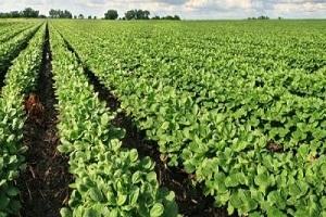 Η κτηνοτροφία και η παραγωγή ζωοτροφών στην πατρίδα μας είναι παραγνωρισμένη μεν, τεράστια πηγή πλούτου δε