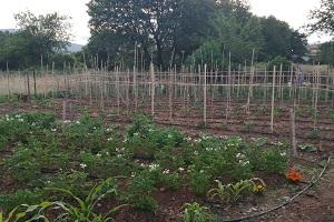 Ε.ΡΩ. Καλαμπάκας - Κήπος Αγροτικού Τομέα Καλαμπάκας (ΦΩΤΟ)