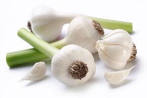 Φυτά καί Βότανα τῆς Ἑλληνικῆς Γῆς καί Θεραπευτική Χρήση αὐτῶν – Μέρος 6ο – Σκόρδο