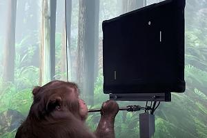 Neuralink: Πίθηκος με τσιπ στον εγκέφαλο έπαιξε παιχνίδια με τη σκέψη