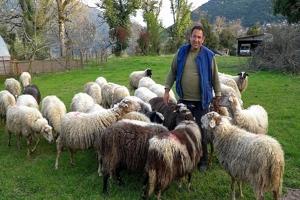 Τα γιδοπρόβατα του Μιχάλη! Η ζωή στο χωριό!